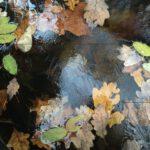 Überfrorener Bach mit Blättern